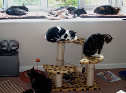 Image of all our cats relaxing